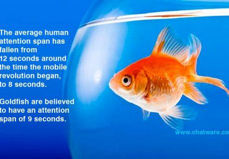 human attention span vs goldfish